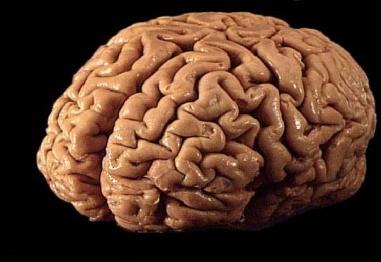 9 невероятни факта за мозъка