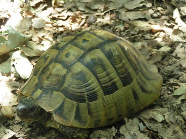 Осъдиха снахата на Цар Киро заради костенурките