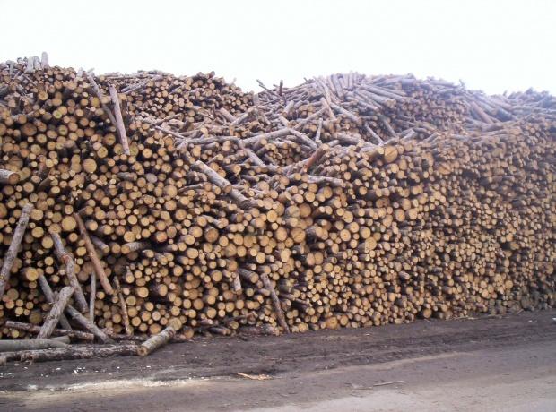 На Софийската стокова борса вече се продават дърва