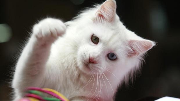 Ще слагаме чипове и на домашните котки