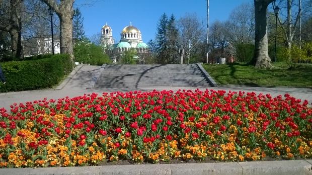 500 хиляди цветя красят София