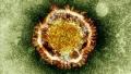 Бургазлия изолира нов вид вирус в почвата в университет в САЩ