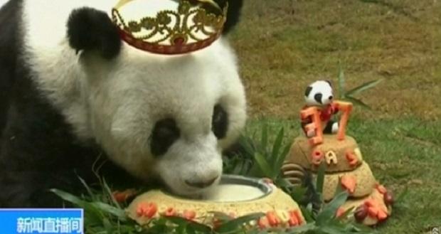 Баси - най-старата панда в света стана на 37 г.