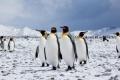 Пингвин-гигант съжителствал с динозаврите преди 61 млн. години