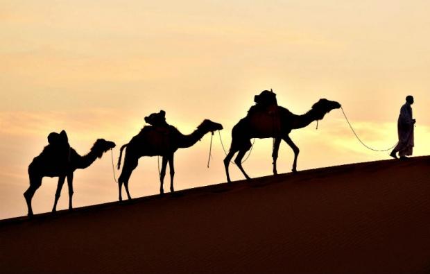 Рекорден награден фонд на тазгодишния фестивал на камилите в Саудитска Арабия