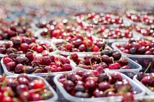 Плодовете и зеленчуците снабдяват организма ни с много полезни вещества,