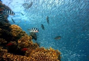 Големият бариерен риф струва 56 млрд. австралийски долара (42 млрд.