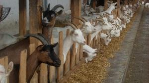 Производители от цялата страна предлагат продукцията си на фермерския пазар