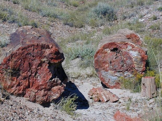 Къде се намира единственото доказателство, че динозаврите са живели по нашите земи?
