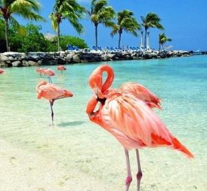 Снимка: Знаете ли къде и какъв е остров Фламинго