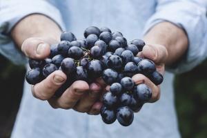 Чепка грозде от сорта