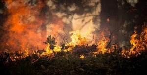 Хаос в Канада заради огромен горски пожар. Броят на евакуираните
