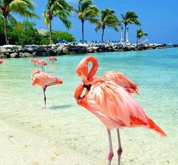 Знаете ли къде и какъв е остров Фламинго