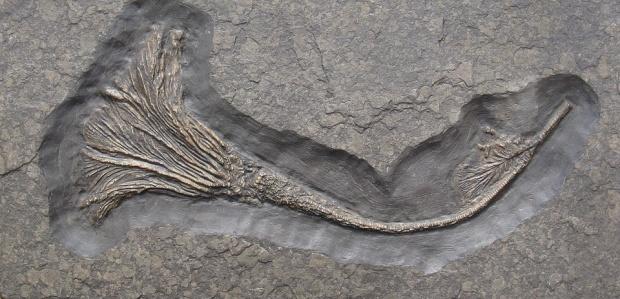 Момче намери фосил на 1,2 млн.години в пустинята в Ню Мексико (ВИДЕО)