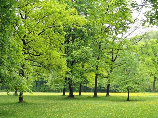 Спряха издирването на Кристиян в горите край Триград