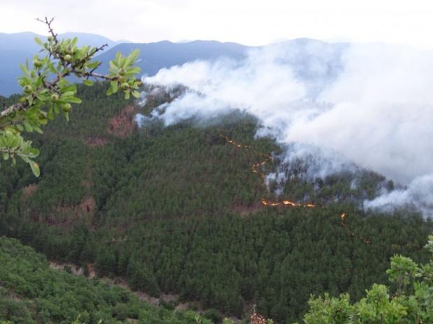 Глоби от 1000 лева за палене на огън в гората