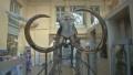 Скелет на мамут на 15 хил. години ще бъде продаден на търг