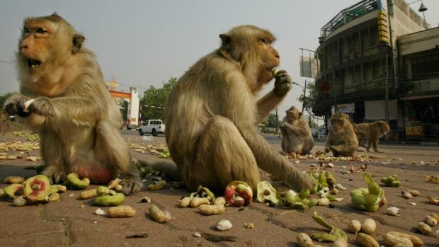 Хиляди гладни маймуни опустошиха две села в Тайланд