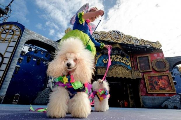 Започва най-престижното изложение на кучета в САЩ