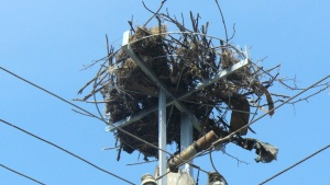 Със 195 нови платформи за обезопасяване на гнезда разположени на