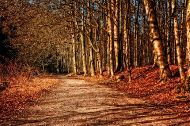 Изсичат незаконно дърветата в столичния Западен парк