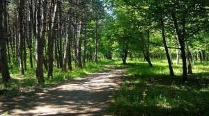 Жителите на няколко столични квартала недоволстват срещу изсичането на гората
