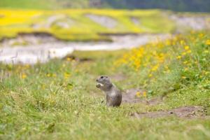 До края на юли учени от Института по биоразнообразие и