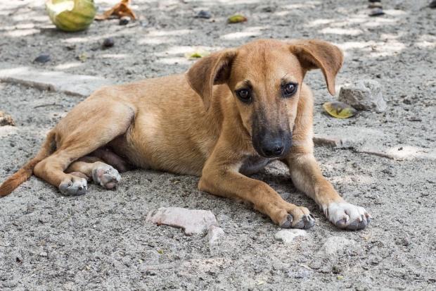 """108 дворни кучета са кастрирани до момента в кампанията на """"Екоравновесие"""""""