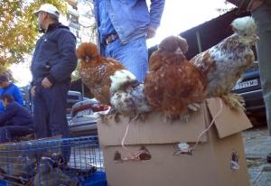 Разбиха нелегален пазар за животни във Варна. Акцията на Българската