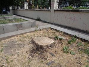 29 от новозасадените дървета покрай Околовръстния път станаха обект на