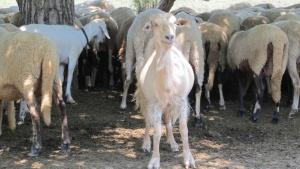 Спешни мерки за ограничаване на заразата сред животните предприема МВР