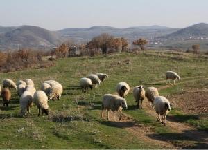 Снимка: КПП-та на входовете на област Стара Загора заради чумата по животните в Ямболско и Бургаско