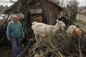 Снимка: Животновъди на протест пред Министерски съвет, искат по-големи обезщетения