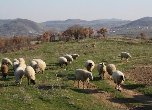 Фермерска блокада на път, не искат да им евтаназират животните
