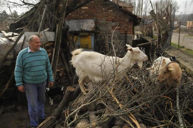 Животновъди на протест пред Министерски съвет, искат по-големи обезщетения