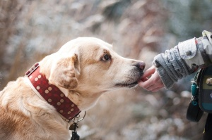 Безстопанствените кучета на територията на Столична община са приблизително 3600,
