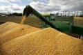 По-ниски са добивите от пшеницата и лавандулата тази година