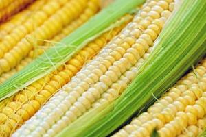 Снимка: Прибират царевицата и слънчогледа в Силистренско