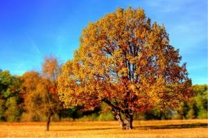В 4 ч. и 54 мин. настъпи астрономическата есен. Днес
