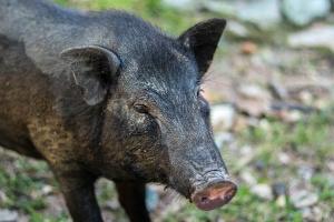 Ловци от Северна България ще протестират срещу подготвяната от Министерството