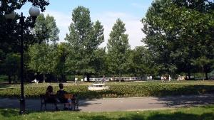 Силният вятър прекърши дърво в Борисовата градина. То е било