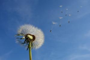 Жълт код за бурни ветрове е в сила и в