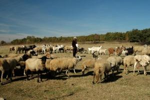 Снимка: ЕК ни налага санкция заради отказа на фермери да ликвидират животните им