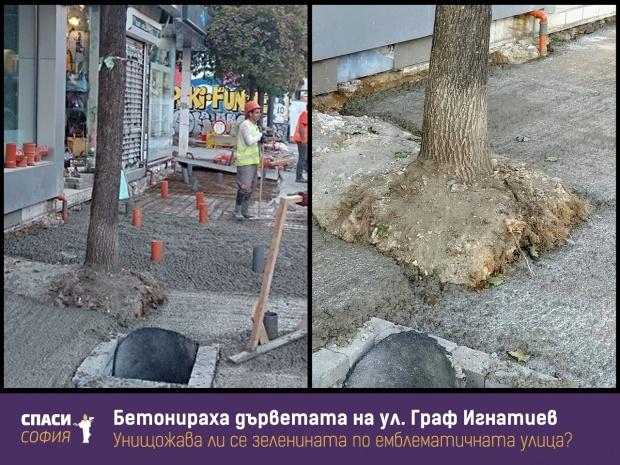 Бетонираха дървета по ул. Граф Игнатиев
