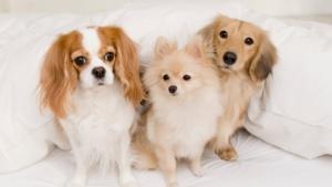 Националенпротестс искане за абсолютна забрана на опитите с животни за
