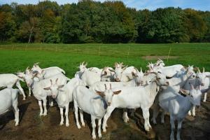 Агенцията по безопасност на храните обяви фермата на Ани Петрова
