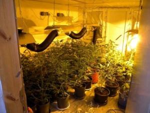 """Две високотехнологични наркооранжерии са разкрити след операция на сектор """"Наркотици"""""""