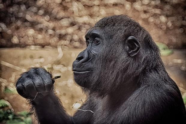 Продължава традиционното демонстративно хранене на животни в столичния Зоопарк