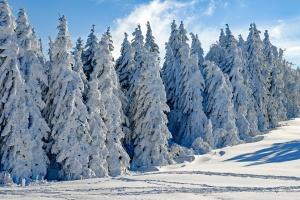 Днес преди обяд валежи от сняг, ще има главно в