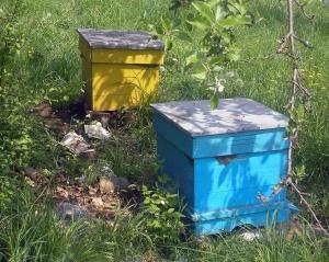 """Снимка: Пчеларите ще получат финансова подкрепа по """"де минимис"""", ако се потвърди намалено производство на мед"""